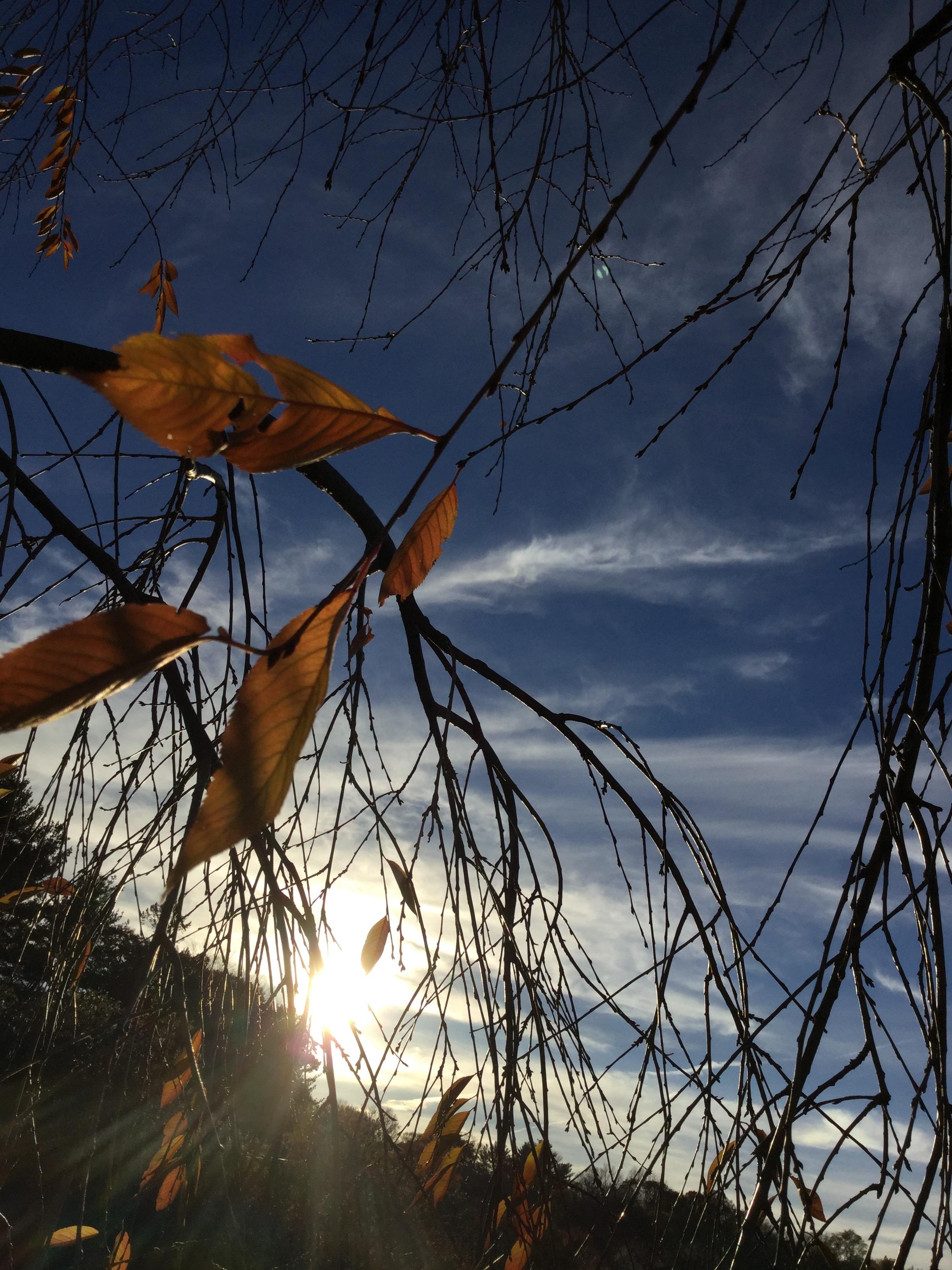 autumn_leaves_sun