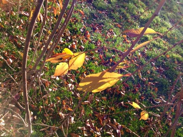 sun_through_leaves
