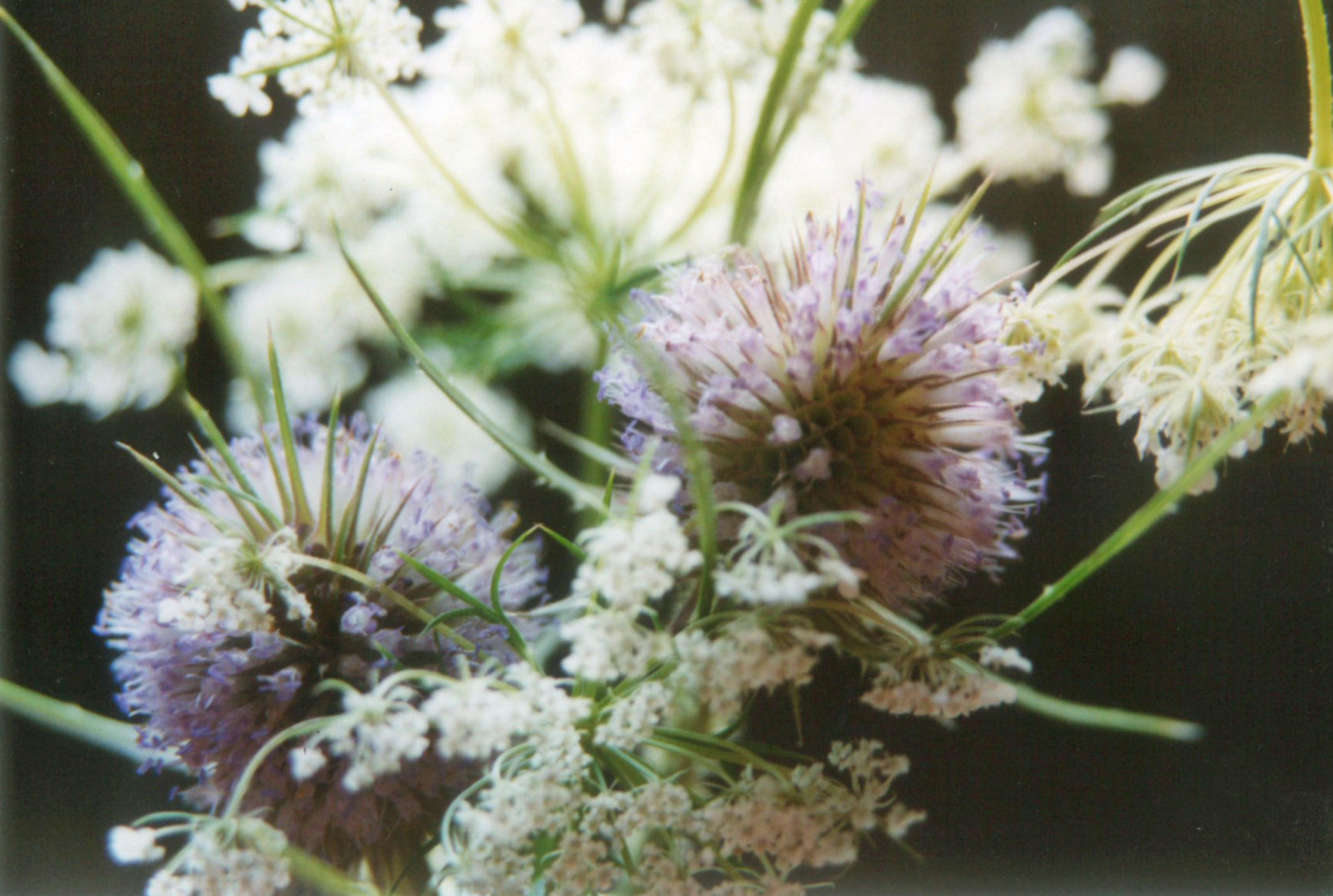 flowers_kirsten